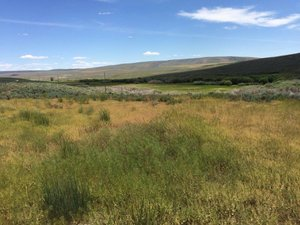 Disaster Peak Cattle Ranch is 848.3 acres water right (adding Claim SW 195 & SW 196).