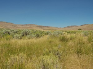 The Rush Creek Ranch is semi-remote situated near the Nevada state line.