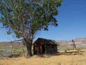 The Rush Creek Ranch property is surrounded primarily by BLM land and Wilderness study areas and consists of level meadow land, with native sage brush, some cottonwood trees and has gentle rolling topography with over a mile of year round Rush Creek running through the land.