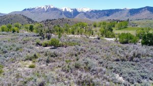 Walker River Front Land is located about 80 miles from the Reno Tahoe International Airport, 30 miles from Gardnerville, NV., 89 miles from Mammoth Lakes, CA., and 124 miles from Bishop, CA.