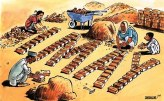 Sabir Nazar Cartoon 14
