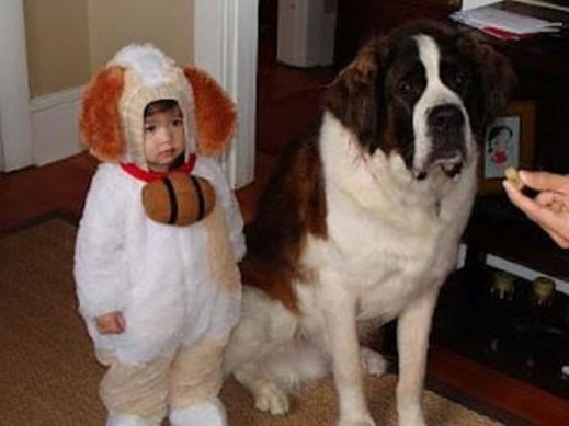 Cute baby animal costumes (49)