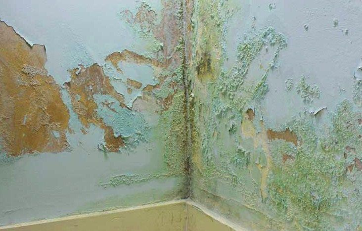Resultado de imagen para imagenes humedad en la pared