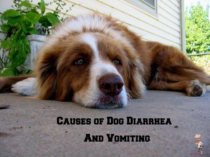 Causes of Dog Diarrhea