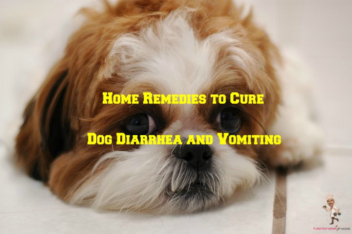 Home Remedies to Cure Dog Diarrhea