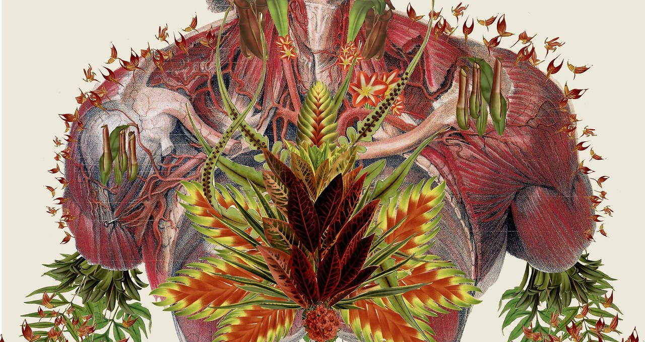 Mixed media artist Travis Bedel composes stunning symbolic collages, which combine anatomical illustrations with a strong fusion of flowers. Representing life and energy in his work, Bedel's surreal collages are conceptually and physically beauty. They symbolize the coexistence between nature and humanity. You can buy his work on Society6 and Etsy.