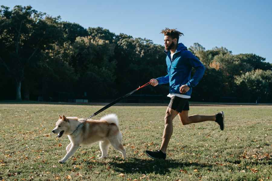 active man training with dog. Photo by Zen Chung on Pexels.com