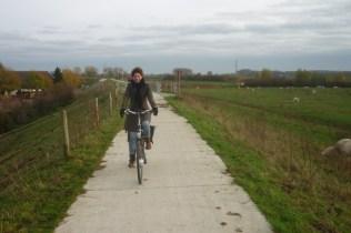 ik op de fiets en koe op het fietspad