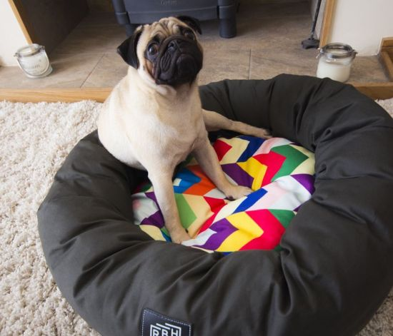 Dog bed image