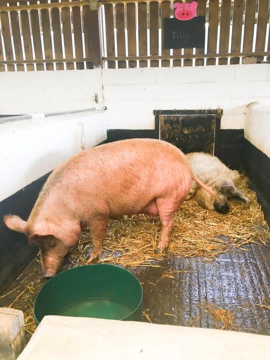 Stockley Farm Cheshire Picture