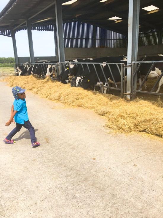 Srockley Farm Picture