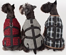 Legitimutt 3 patterned dogs FashionDailyMag loves
