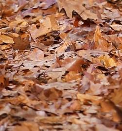MISSONI MENSWEAR fw16 FashionDailyMag 11 leaves