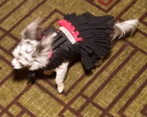 Pet Fashion Week 17 FW Fashiondailymag PaulMorejon 8