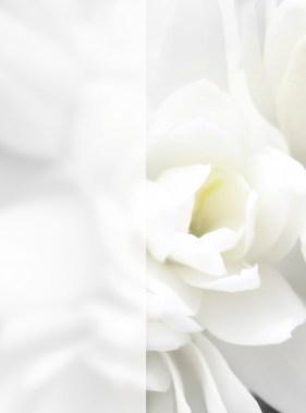 Mon Premier Cristal Collection Flowers - 300 dpi