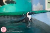 Travel Okinawa Fairy Penguin Bar