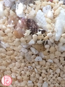 star shaped sand