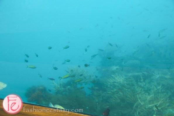 馬爾地夫Ithaa海底餐廳
