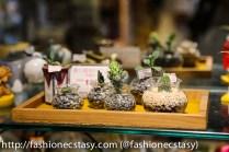 Doro succulents souvenir shop Tainan English friendly store