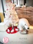 時尚高潮YT食記影片- Polar Cafe 北極熊寶拉熊主題下午茶餐廳西門旗艦店 - Polar Cafe MRT Ximen flsgship store review & vlog