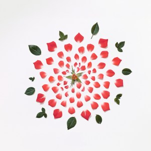 red-rose-exploded-museo-portfolio-rag-A3