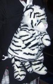 My White Tiger, when I First Got Him