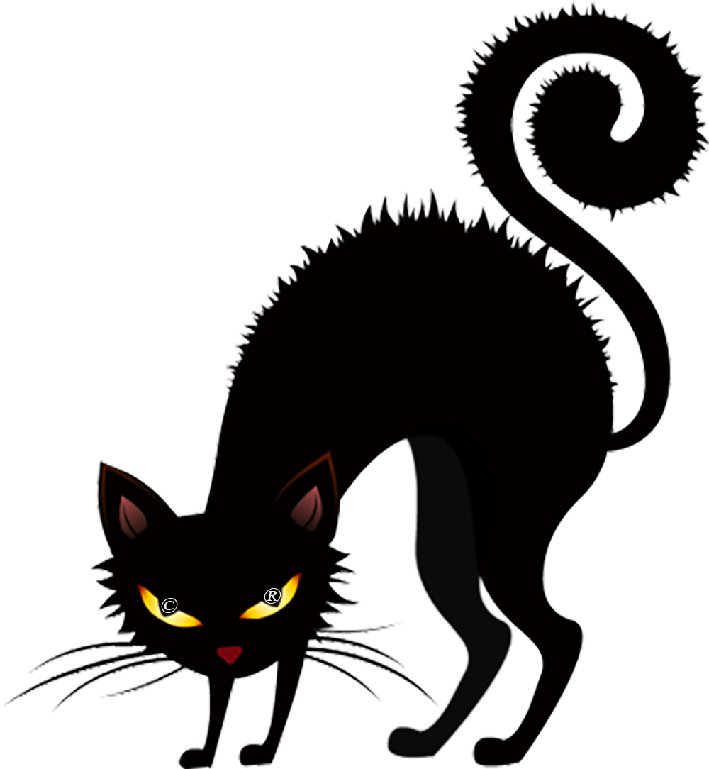 Black cat with arched back and curled tail