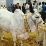 eid ul azha latest HD images pictures and wallpapers