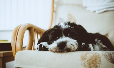 What's the Best Vacuum for Pet Hair? eXclusive Guide