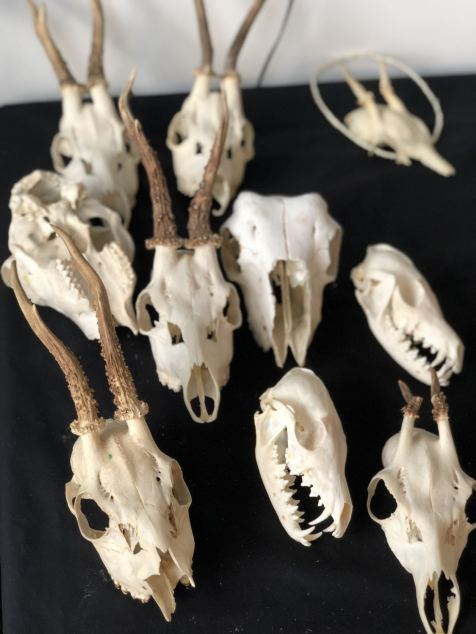 A table filled with large roe and fox skulls at Moth Studios ready to be decorated by a class of 7 people as part of a skull decorating workshop. - fashion Voyeur