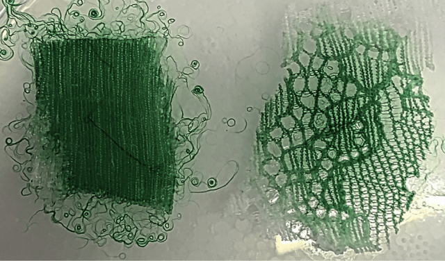 Geaney's Photobacterium Kishitanni, An Exploration of Non-Traditional Materials