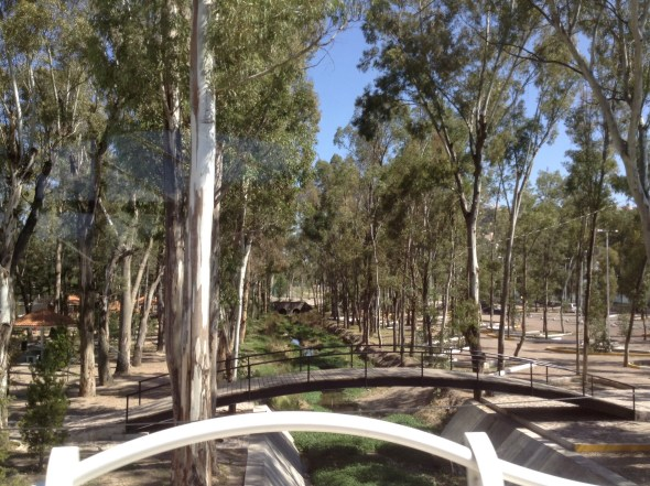 18,000 Eucalyptus trees - no koala bears though