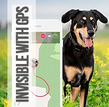 invisible fence gps nest wiring diagram heat pump best wireless dog review and buyers guide fast dogs