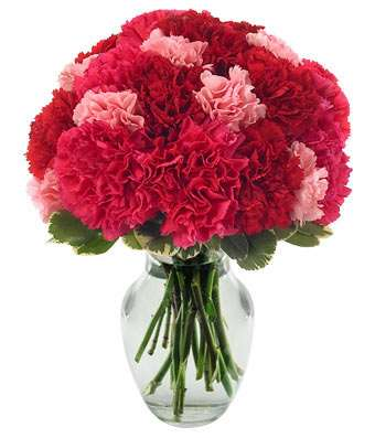 Very Berry Carnations Bouquet