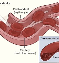 diagram of a blood cell [ 1575 x 1213 Pixel ]