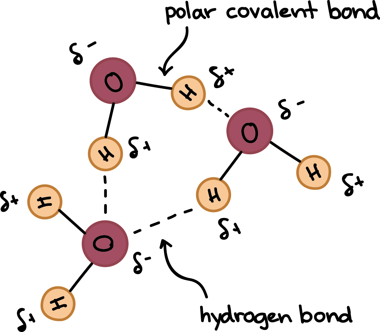 water molecule diagram heil ac wiring and carbohydrates revision cards in a level ib