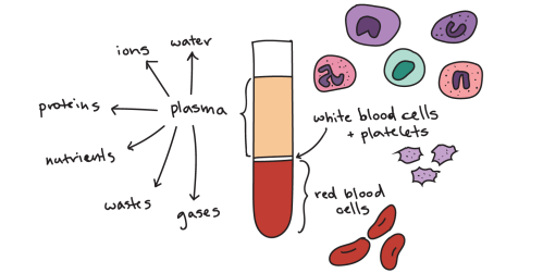 small resolution of the denser cells and platelets move to the bottom of the tube forming red and white layers while the plasma remains at the top forming a yellow layer