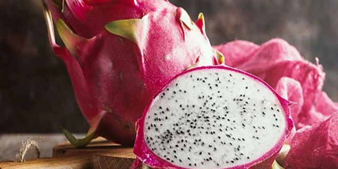 Dragon Fruit Price Update - Export Of Indian Dragon Fruit Abroad, The First Consignment Sent From These 2 States To London And Bahrain_Pic Credit Google