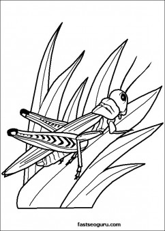 Grasshoppers Childrens Coloring Sheets Printable