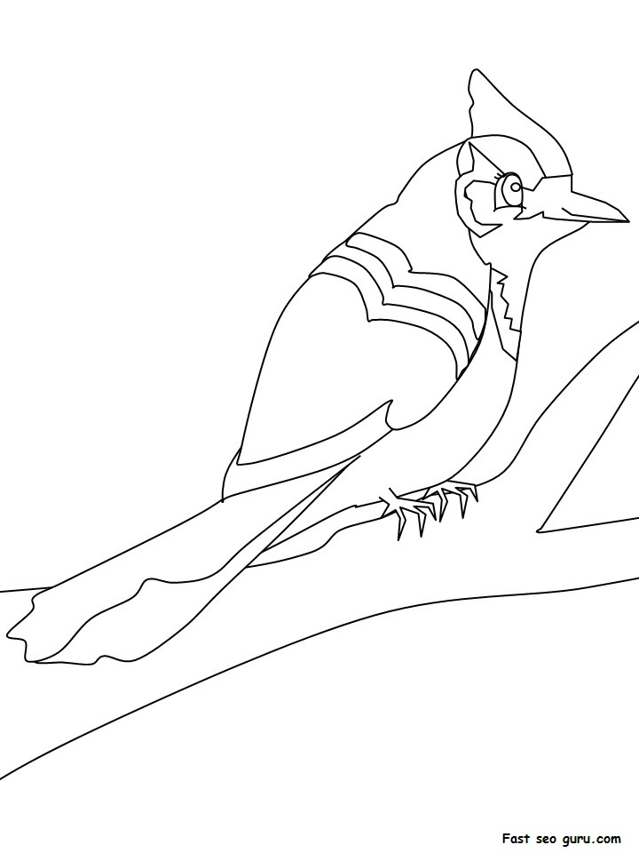 Blue Jay Bird Coloring Page
