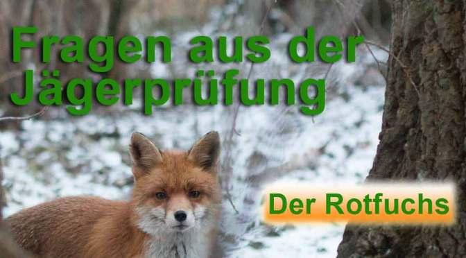 """Jagdprüfung """"Rotfuchs"""" – Testen Sie Ihr Wissen!"""