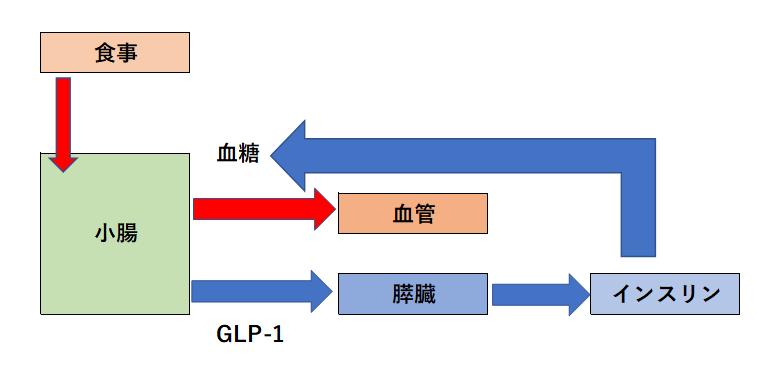 GLP-1の働き