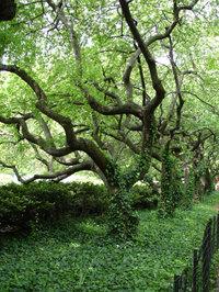Conservatorygarden1