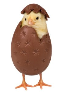 If that doesn't work, how about Chocolate Covered Chick Breaks Out of Her Shell!
