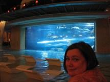 Golden Nugget Shark Tank Slide Las Vegas
