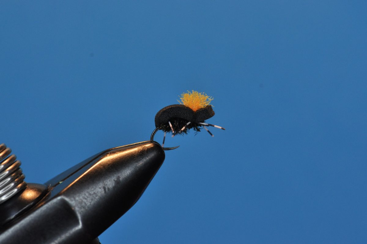 Beetle Fly Step-by-Step
