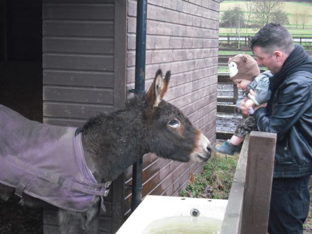 https://i0.wp.com/fatgayvegan.com/wp-content/uploads/2011/02/bobby-donkey.jpg?fit=640%2C480