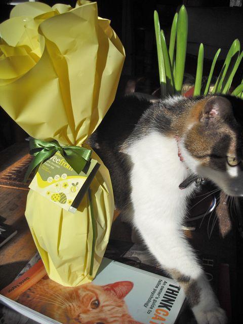 https://i0.wp.com/fatgayvegan.com/wp-content/uploads/2011/03/vegan-egg-cat.jpg?fit=480%2C640&ssl=1