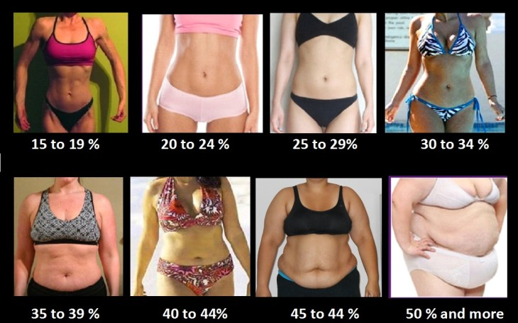 Image illustrating female body fat percentages