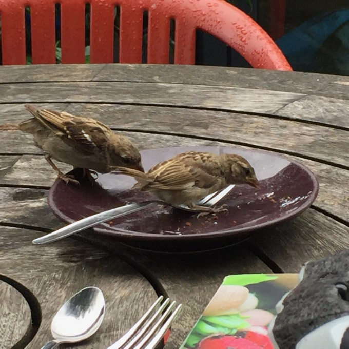 Birds eating crumbs from a plate